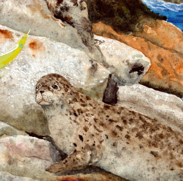 harbor seal, baby seal, maine seal