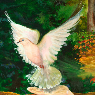 fluttering dove, pale mourning dove, pale dove, dove flying, woman with dove