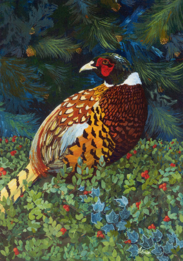 Beautiful Christmas Card or Greeting Card with Ring Necked Pheasant sitting in bear berry and ivy