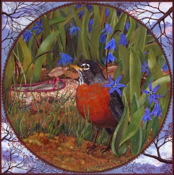 American Robin among blue spring wildflowers